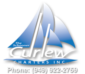 Curlew Logo